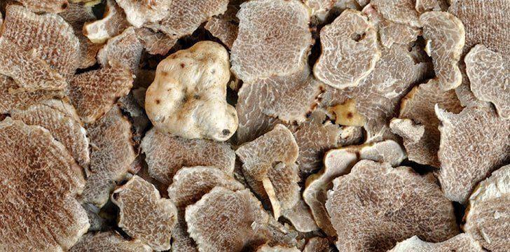 If you like truffles, then thank the oaks.