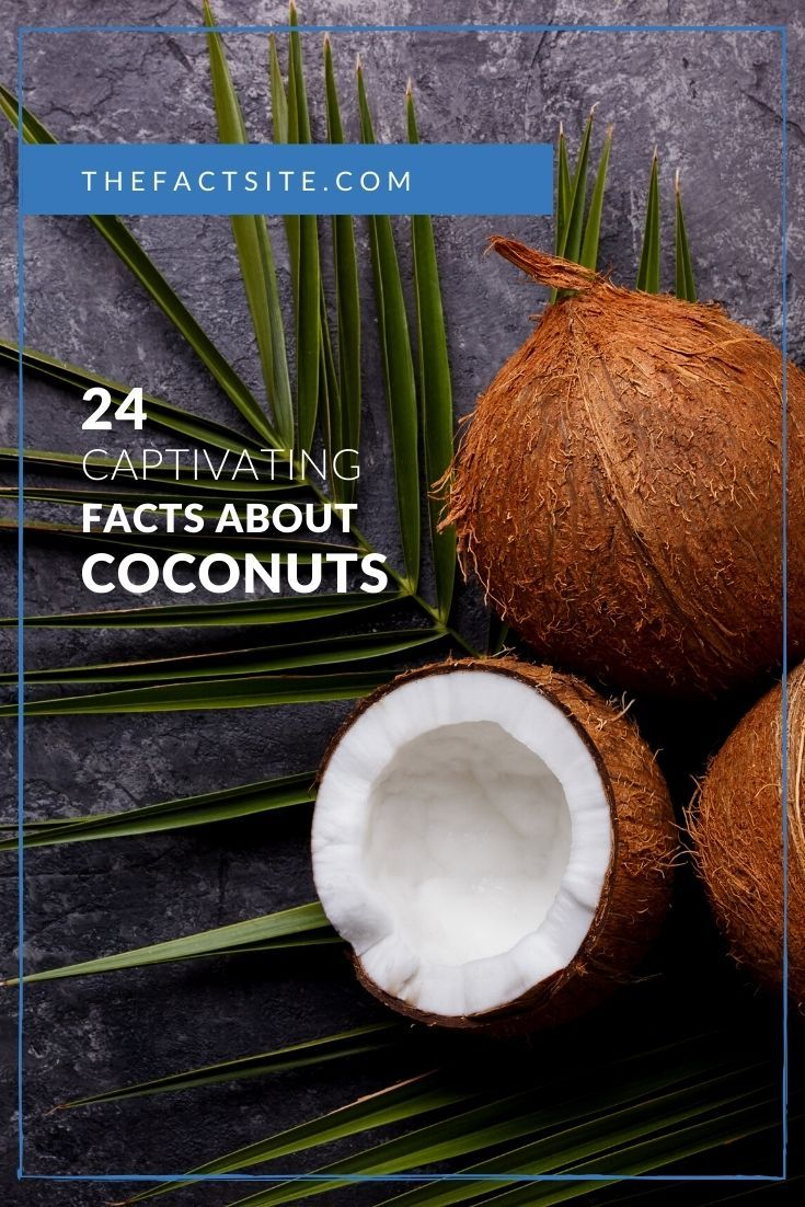 24 Captivating Facts About Coconuts
