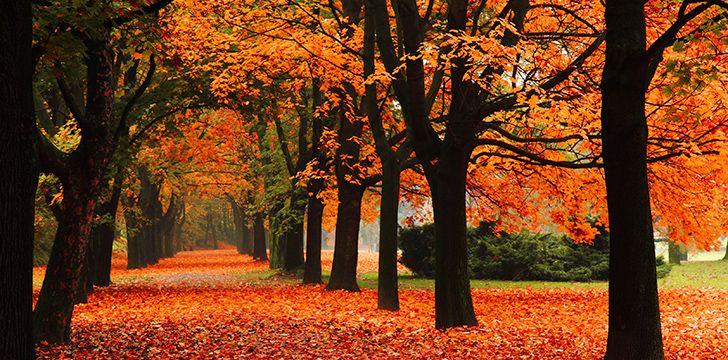Autumn Versus Fall