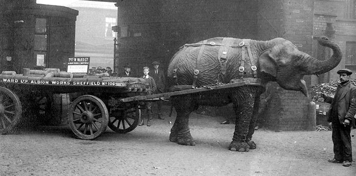 Sheffield's Mascot was an Elephant