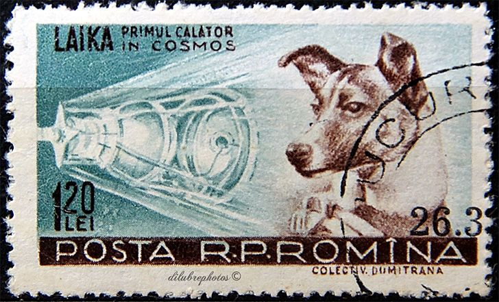 Laika Space Dog - 100 Facts About Space