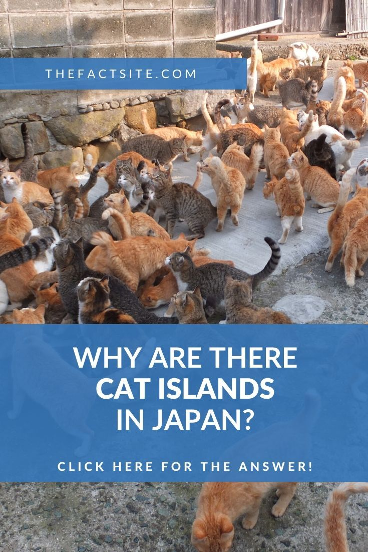 Why Are There Cat Islands in Japan?