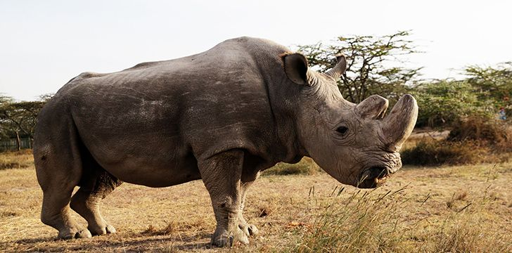Rhinos and oxpeckers have what scientists call a symbiotic relationship.