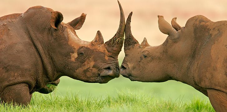 World Rhino Day is celebrated on 22nd September.