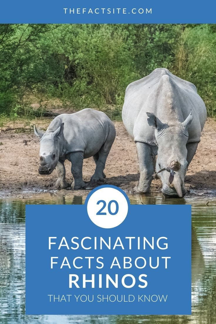 20 Fascinating Facts About Rhinos That You Should Know