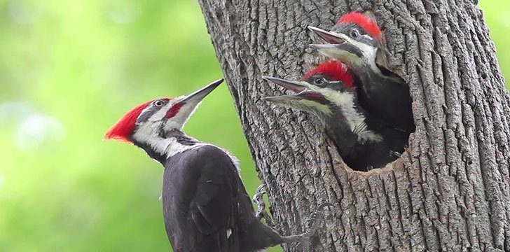Woodpeckers peck because they can.