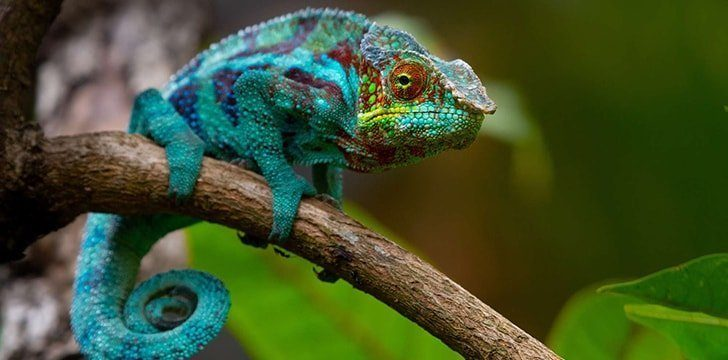 Some lizards can change color.
