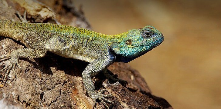 12 Delightful Facts About Lizards