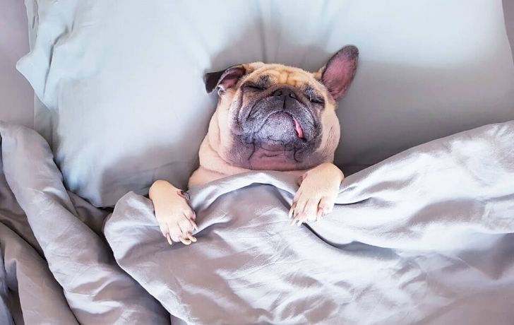 A dog sleeping in bed