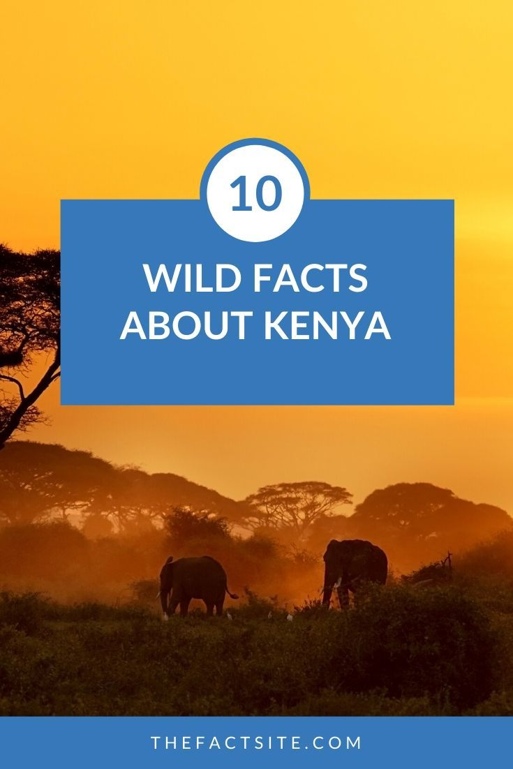 10 Wild Facts About Kenya