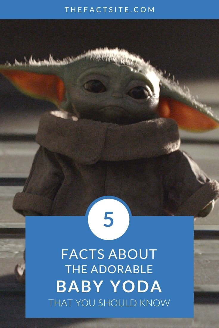 5 Facts About The Adorable Baby Yoda