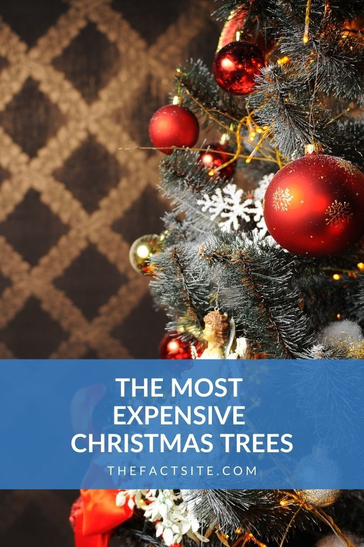 The Most Expensive Christmas Trees