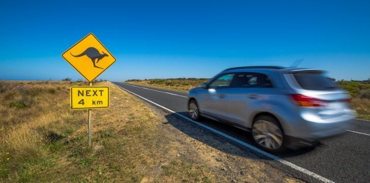 A car driving down a highway with a sign to warn drivers about kangaroos in the area