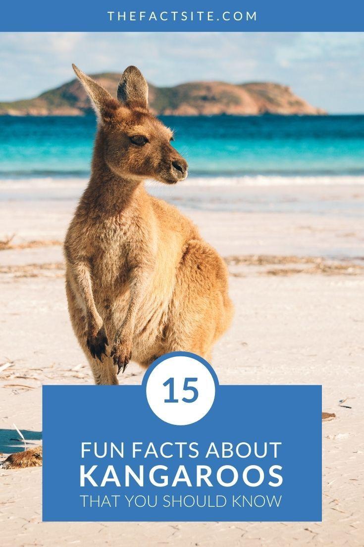 15 Fun Facts About Kangaroos