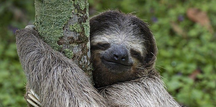 There's more to a sloth's smile than we think.
