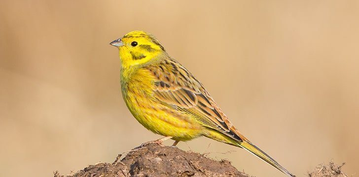"One of Alabama's nicknames is ""The Yellowhammer State."""