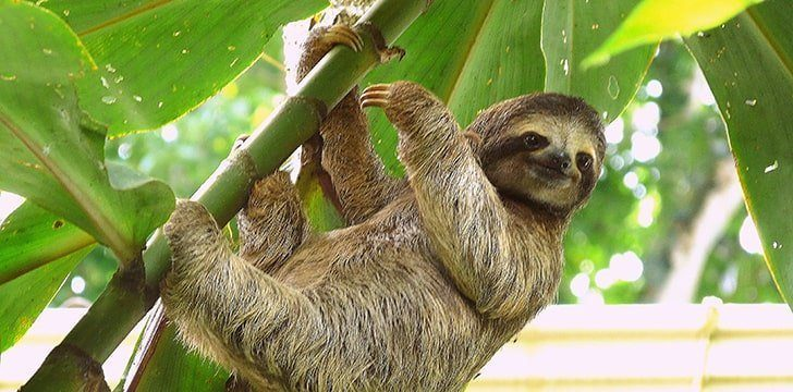 Sloths spend up to 90% of their lives hanging upside down.