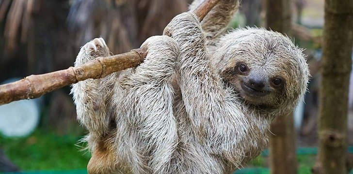 Fantastic Sloth Facts