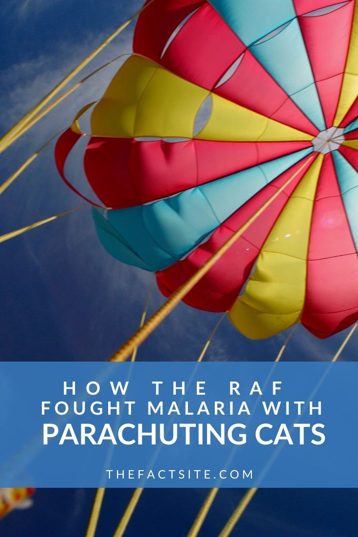 How The RAF Fought Malaria With Parachuting Cats