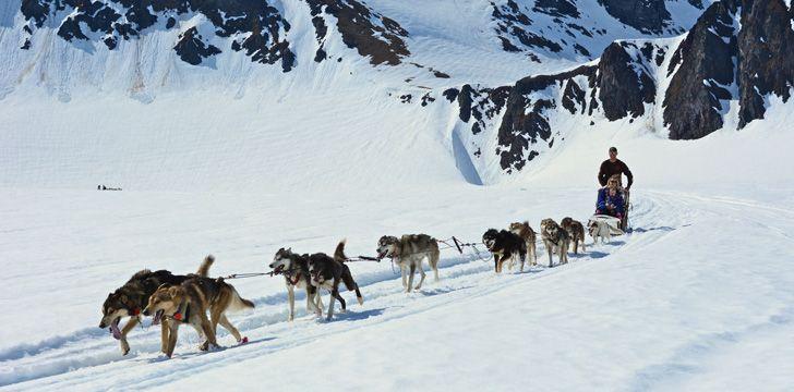 Dog sledding is the official sport of Alaska.