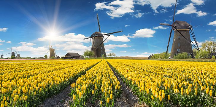 Tulips ARE NOT from the Netherlands.