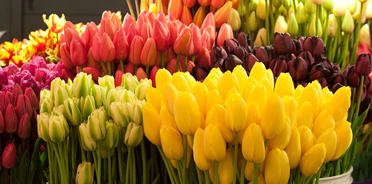 Tulips are edible.