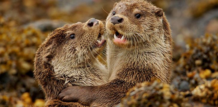 Fantastic Facts about Otters