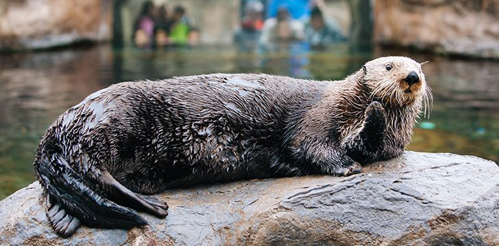 The majority of otters spend most of their time on land.