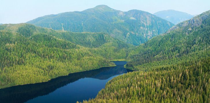 Alaska is home to the largest national forest in the US.