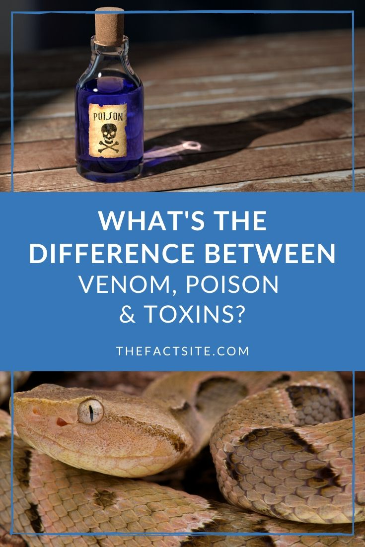 What's The Difference Between Venom, Poison & Toxins?