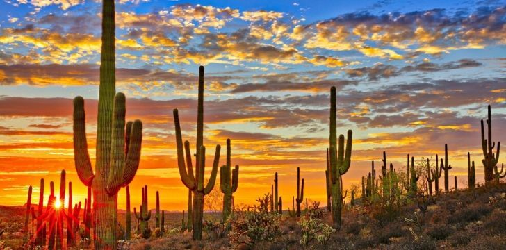 Cutting down certain cacti is a felony in Arizona