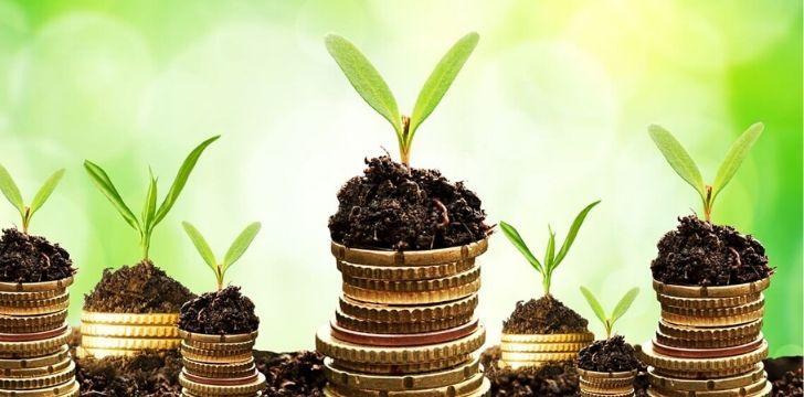 Seedlings growing onto of stacks of coins
