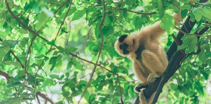 Image of a monkey on a tree in a jungle.