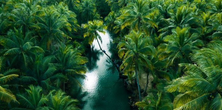 Image from the air of a busy jungle and a river passing through the trees.