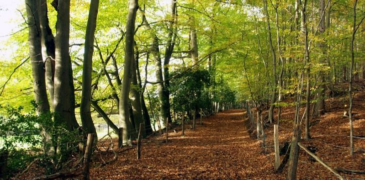 A woodland with the leafy trail.