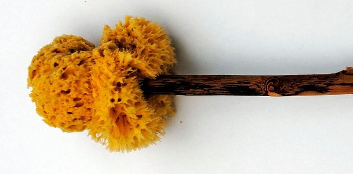 Picture of a xylogspongium which is a stick with a sponge on the end used in an ancient roman bathroom.