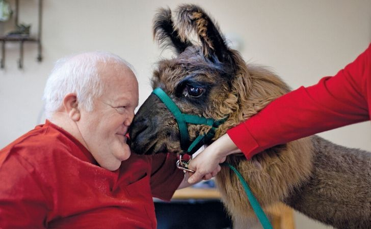 A llama giving therapy.