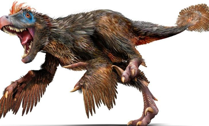 Velociraptor with lots of feathers.