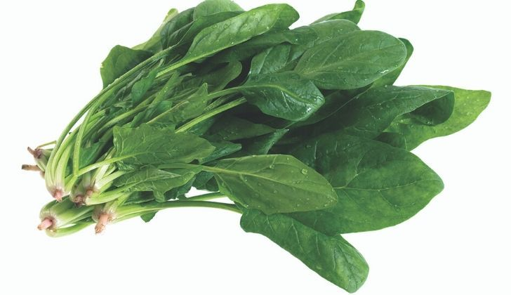A bunch of spinach leaves