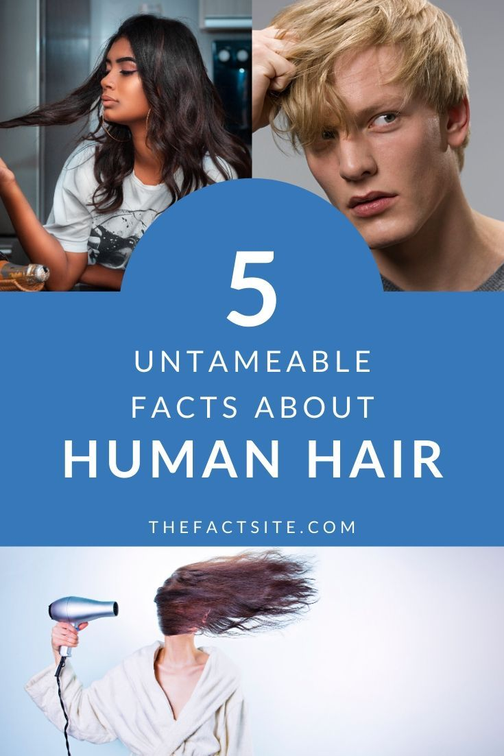 5 Untameable Facts About Human Hair