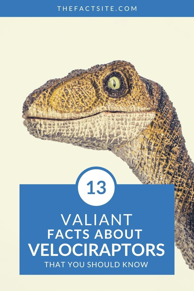 13 Valiant Facts About Velociraptors
