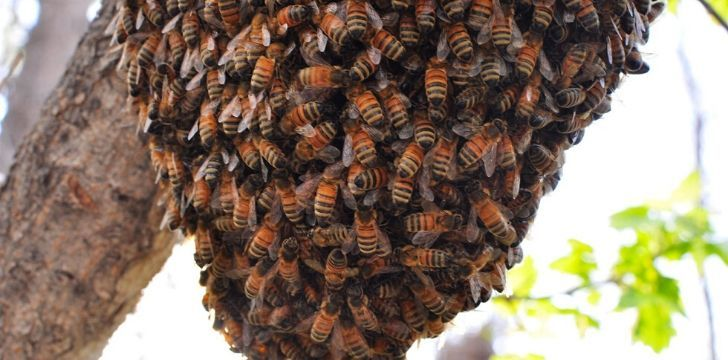 A hanging beehive covered in bees