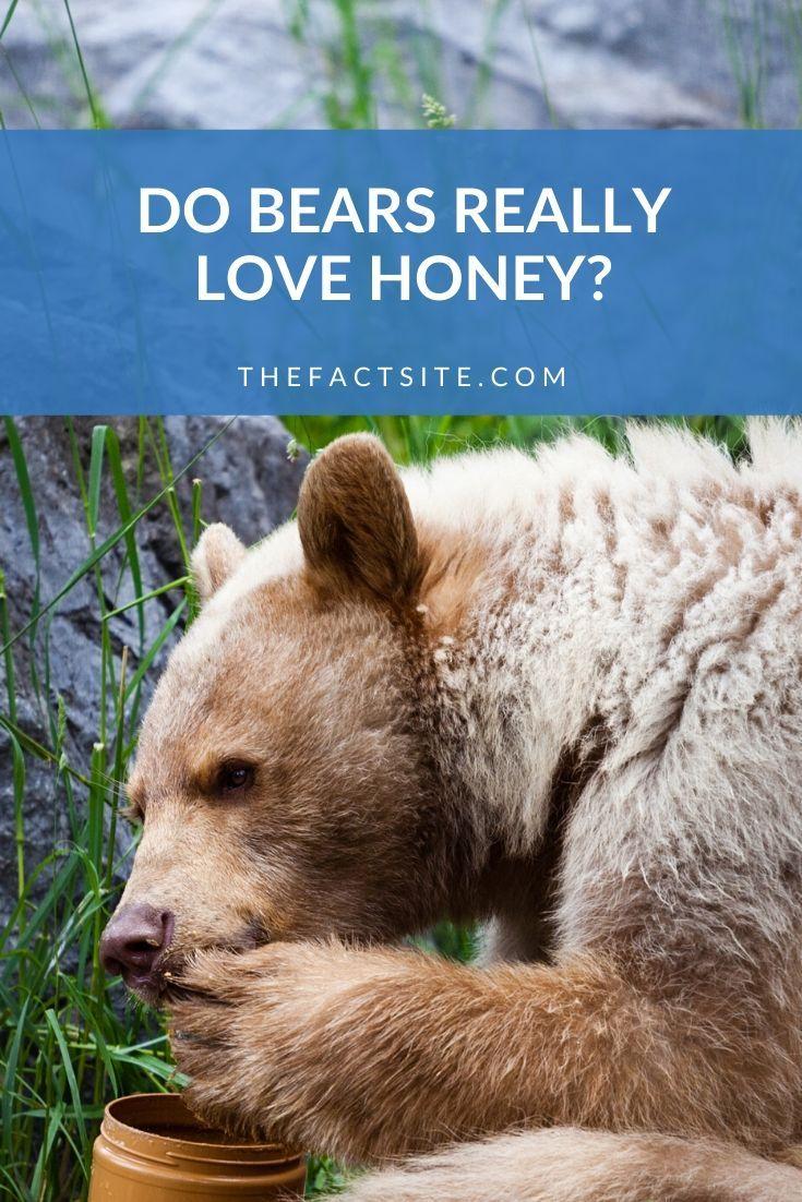 Do Bears Really Love Honey?