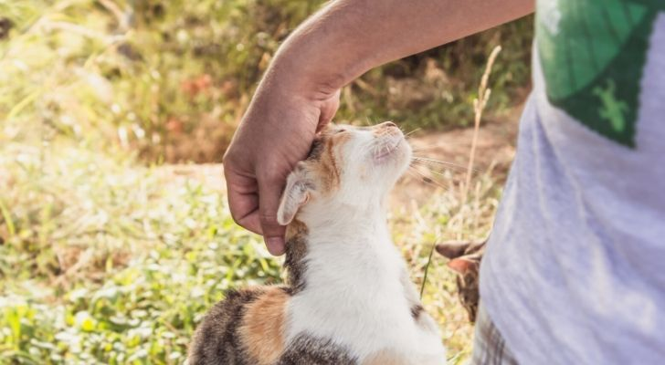 A cat showing a human affection