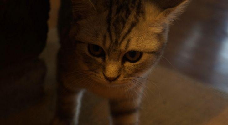 A cute cat that looks scared