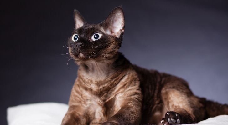 A cat with wide open eyes and ears pointed upwards