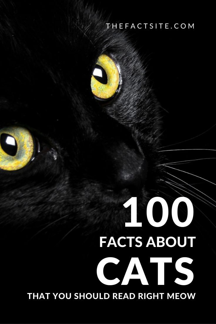 100 Facts About Cats That You Should Read Right Meow
