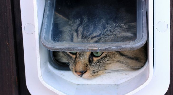 A cat poking its head out of a cat flap
