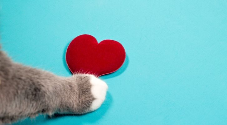Cat paw touching a love hear shape on a blue background