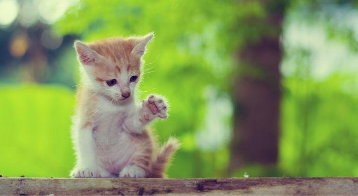 A kitten sat on wood giving a high five signal